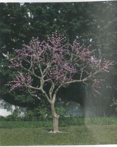 TO-2902 梅花樹